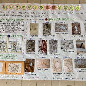街の壁に眠った化石を探せ!!